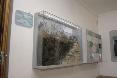Природознавчий музей